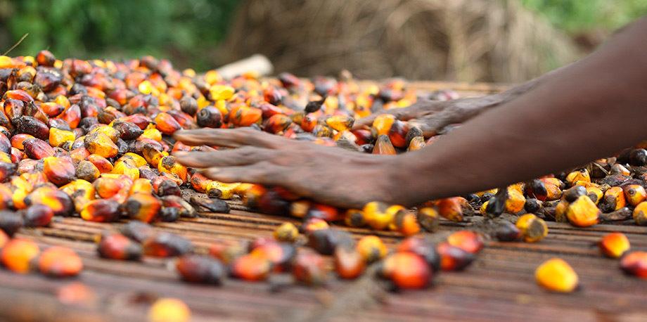 Palm Production