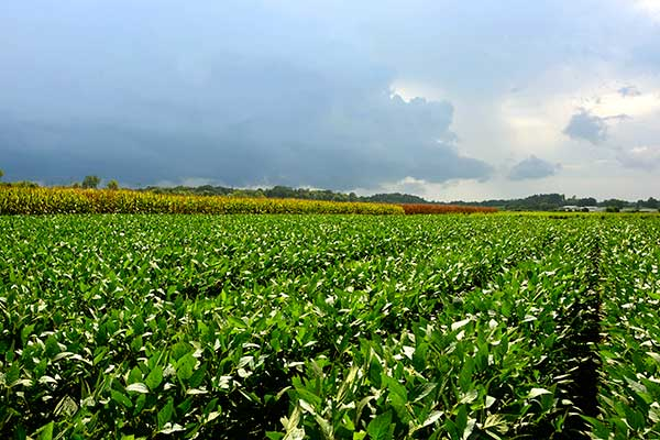 Increasing Agricultural Productivity and creating a sustainable farm